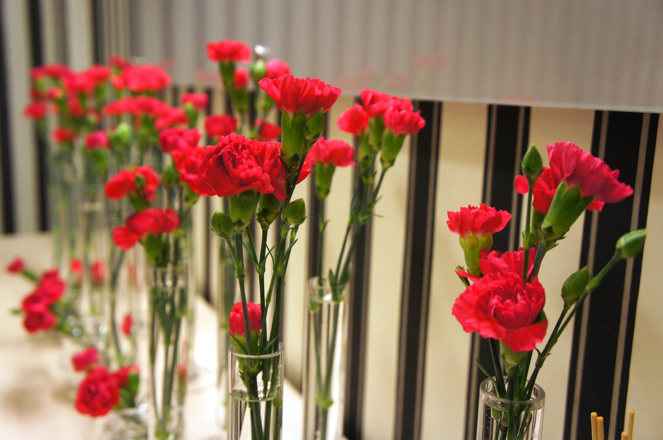 Ktore Z Popularnie Dostepnych Kwiatow Sa Najtwalsze Przedstawiamy 10 Wytypowanych Przez Nas Gatunkow Studio Atamaris